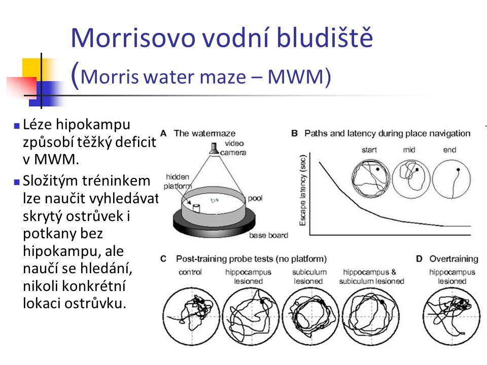 Morrisovo vodní bludiště ( Morris water maze – MWM ) Léze hipokampu způsobí těžký deficit v MWM. Složitým tréninkem lze naučit vyhledávat skrytý ostrů