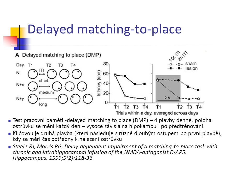 Delayed matching-to-place Test pracovní paměti -delayed matching to place (DMP) – 4 plavby denně, poloha ostrůvku se mění každý den – vysoce závislá n