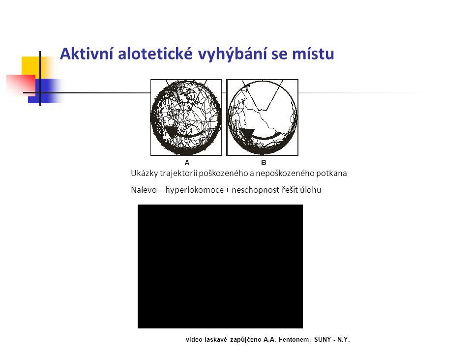 Aktivní alotetické vyhýbání se místu Ukázky trajektorií poškozeného a nepoškozeného potkana Nalevo – hyperlokomoce + neschopnost řešit úlohu video las