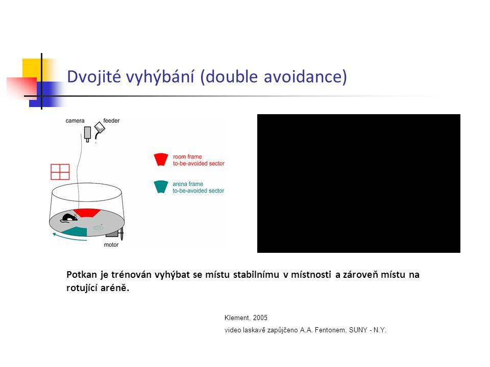 Dvojité vyhýbání (double avoidance) Klement, 2005 video laskavě zapůjčeno A.A. Fentonem, SUNY - N.Y. Potkan je trénován vyhýbat se místu stabilnímu v