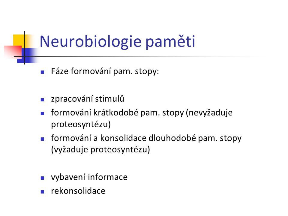 Neurobiologie paměti Fáze formování pam. stopy: zpracování stimulů formování krátkodobé pam. stopy (nevyžaduje proteosyntézu) formování a konsolidace