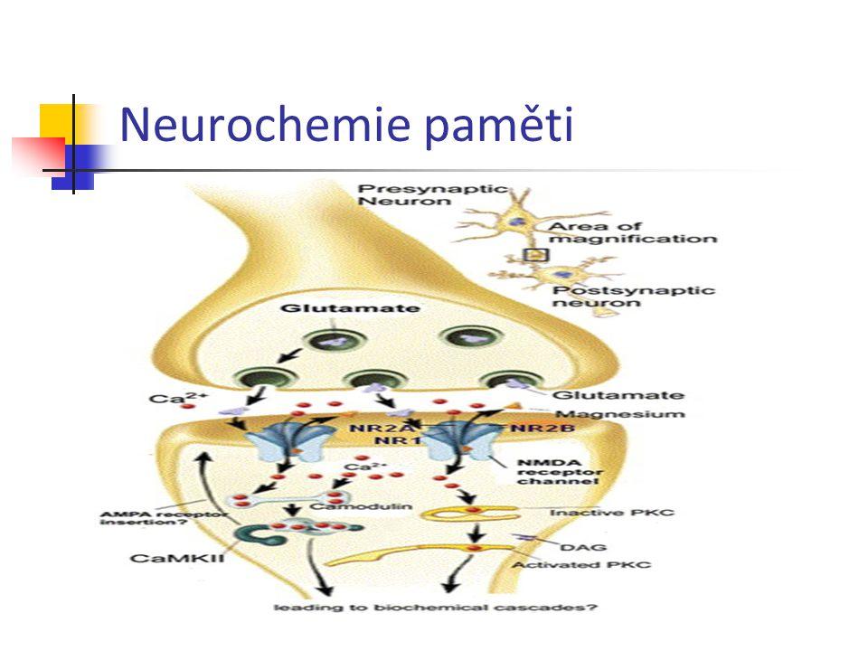 Neurochemie paměti