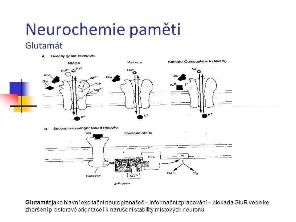 Neurochemie paměti Glutamát Glutamát jako hlavní excitační neuropřenašeč – informační zpracování – blokáda GluR vede ke zhoršení prostorové orientace