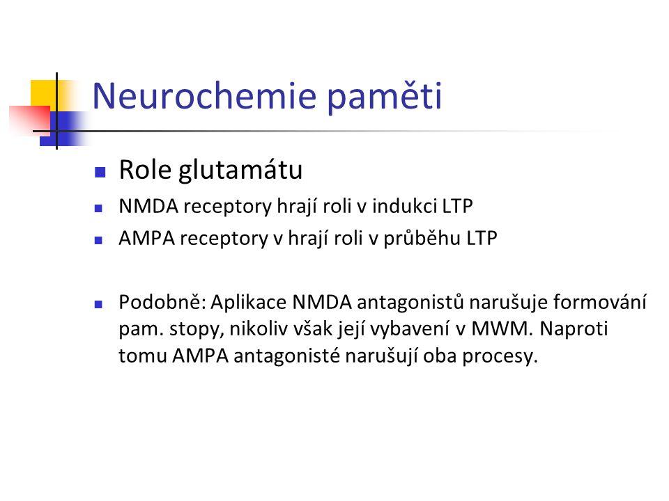 Neurochemie paměti Role glutamátu NMDA receptory hrají roli v indukci LTP AMPA receptory v hrají roli v průběhu LTP Podobně: Aplikace NMDA antagonistů