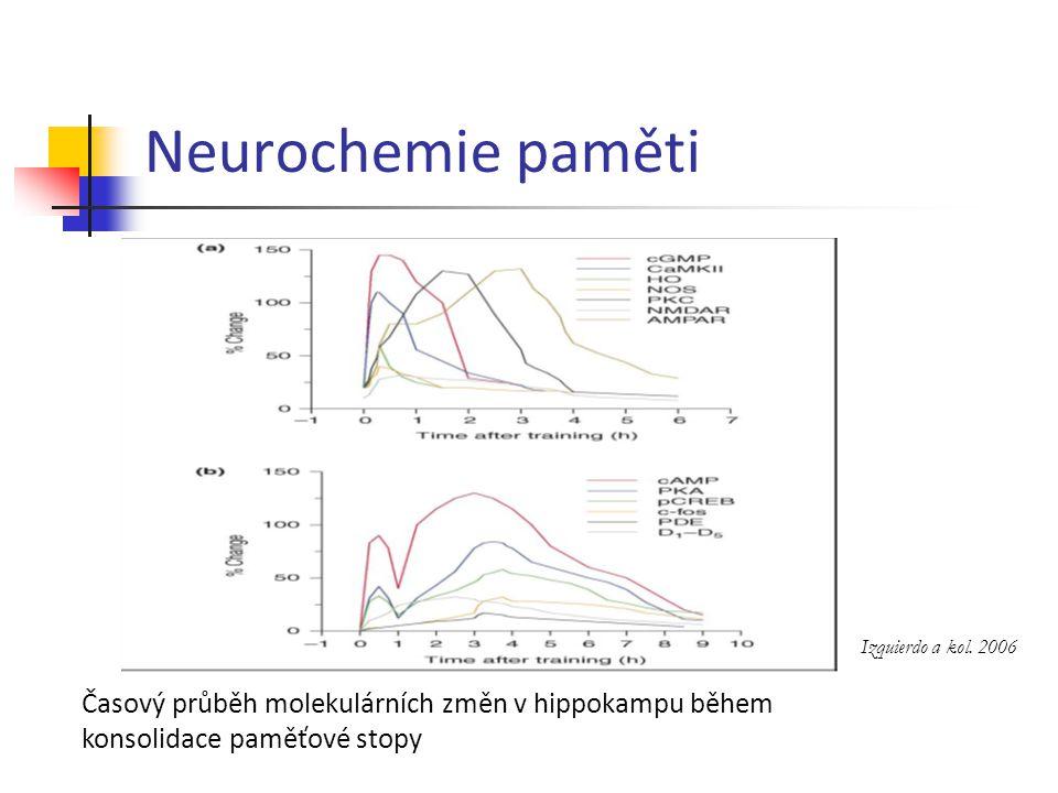 Neurochemie paměti Izquierdo a kol. 2006 Časový průběh molekulárních změn v hippokampu během konsolidace paměťové stopy