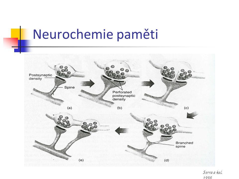 Neurochemie paměti Sorra a kol. 1998