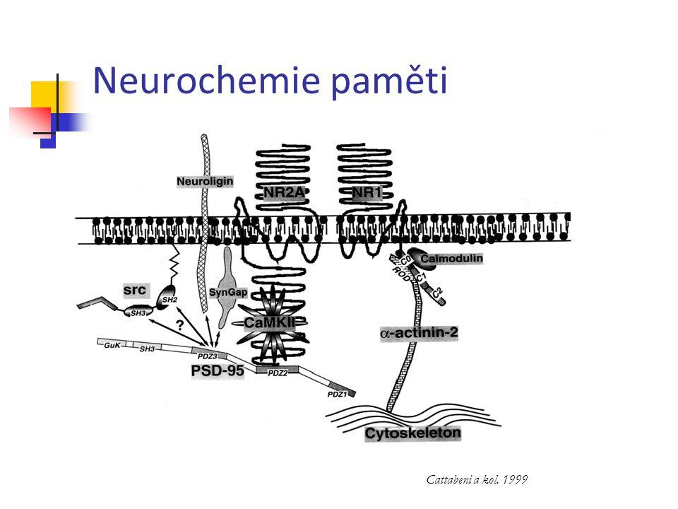 Neurochemie paměti Cattabeni a kol. 1999