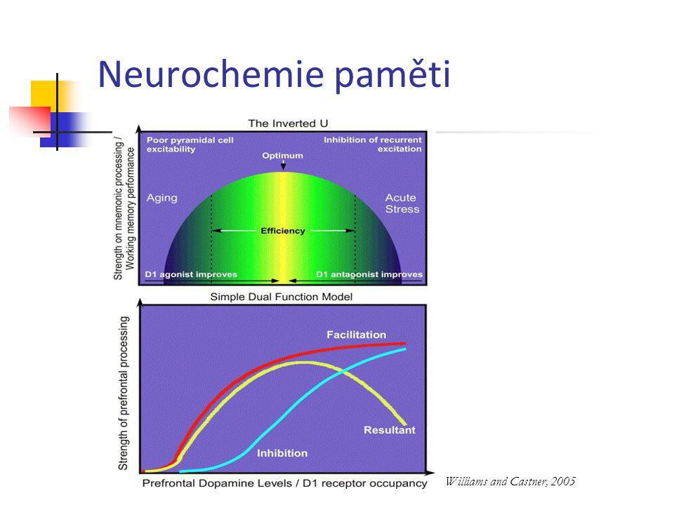 Neurochemie paměti Williams and Castner, 2005