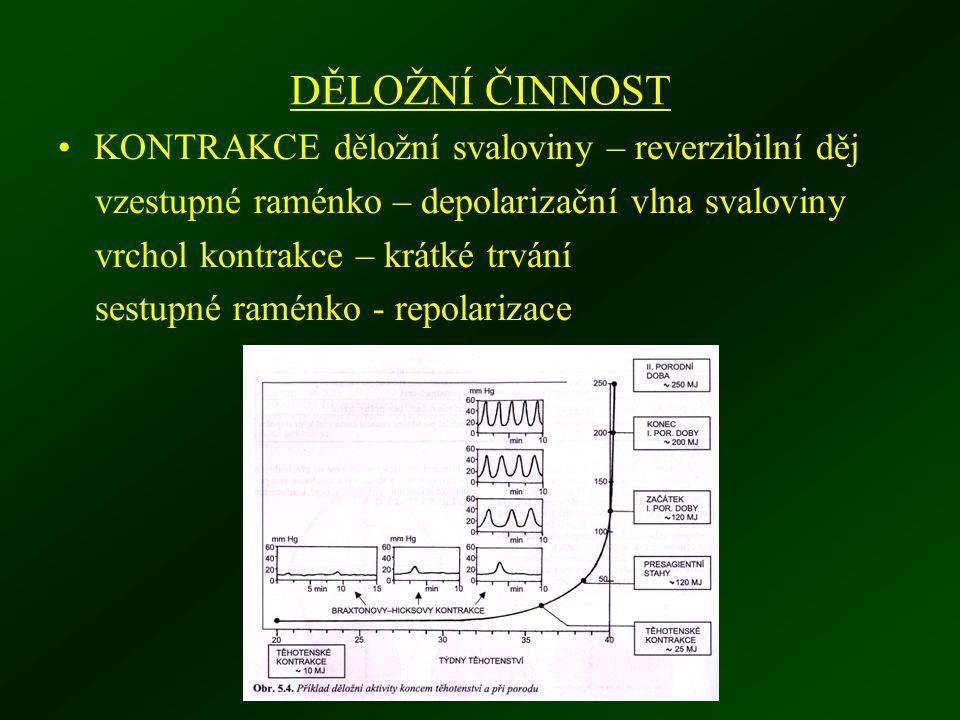 DĚLOŽNÍ ČINNOST KONTRAKCE děložní svaloviny – reverzibilní děj vzestupné raménko – depolarizační vlna svaloviny vrchol kontrakce – krátké trvání sestupné raménko - repolarizace