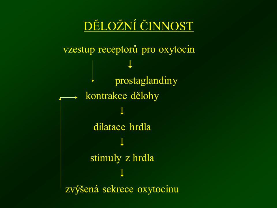 DĚLOŽNÍ ČINNOST vzestup receptorů pro oxytocin  prostaglandiny kontrakce dělohy  dilatace hrdla  stimuly z hrdla  zvýšená sekrece oxytocinu