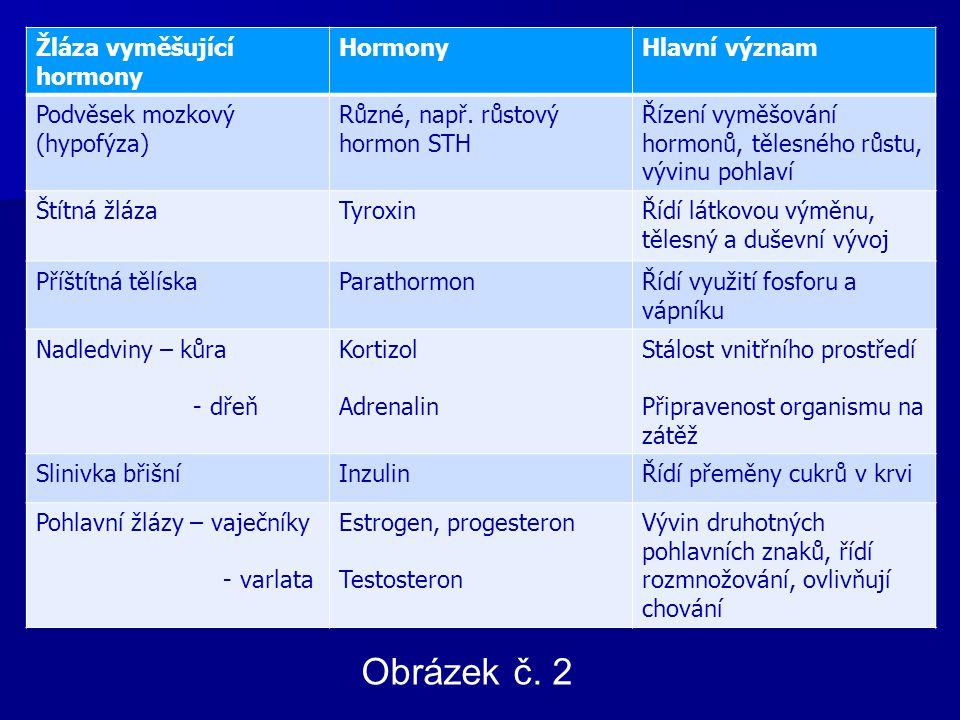 Žláza vyměšující hormony HormonyHlavní význam Podvěsek mozkový (hypofýza) Různé, např.