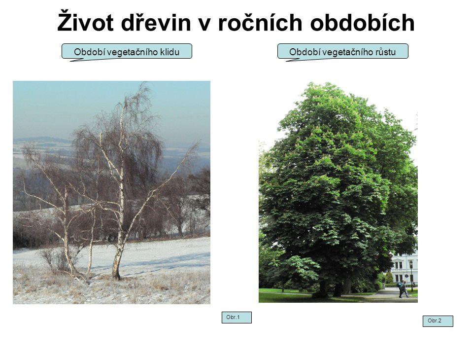 Život dřevin v ročních obdobích Období vegetačního klidu Obr.1 Obr.2 Období vegetačního růstu
