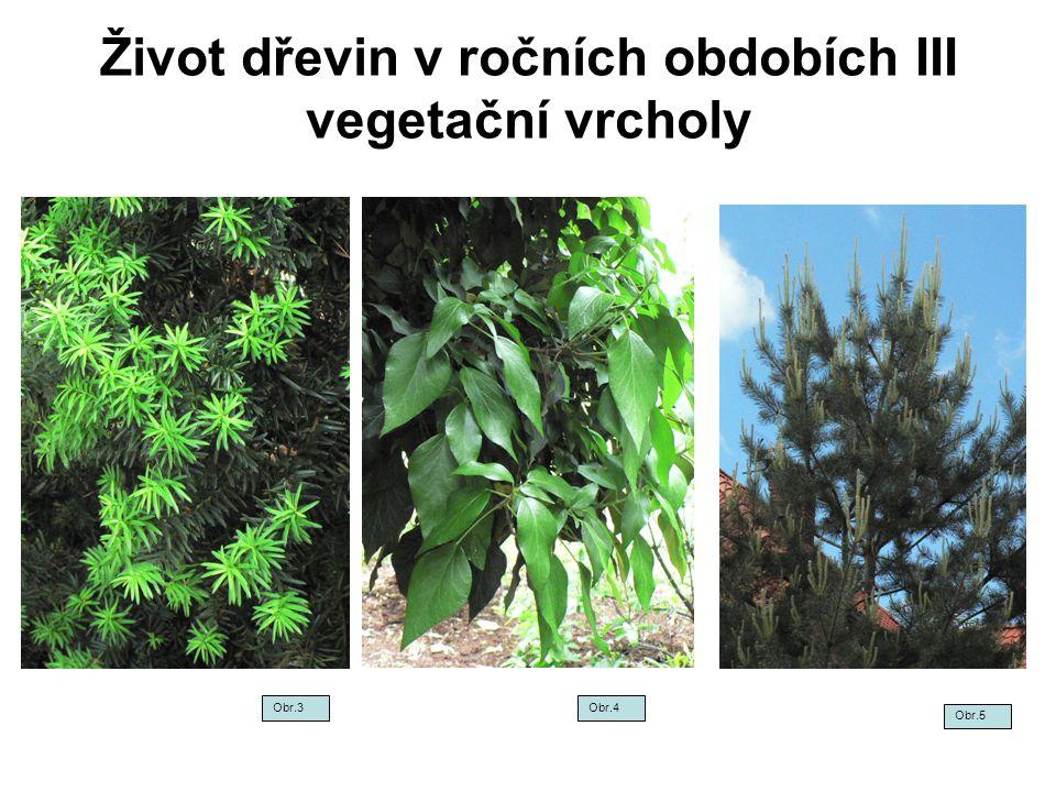 Život dřevin v ročních obdobích III vegetační vrcholy Obr.5 Obr.3Obr.4
