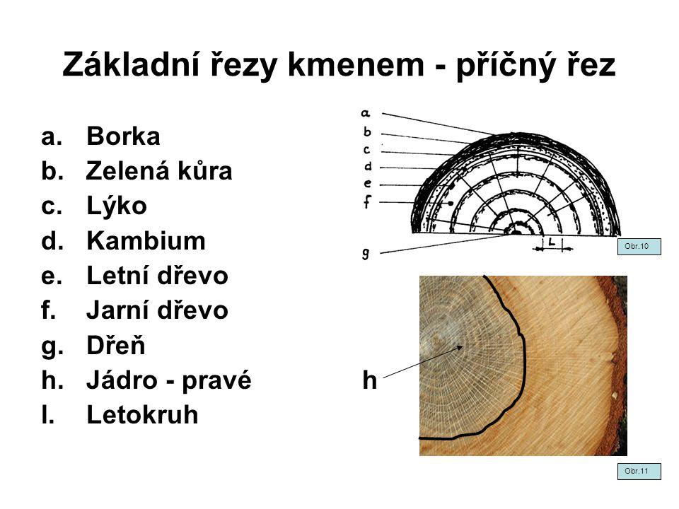 Základní řezy kmenem - příčný řez a.Borka b.Zelená kůra c.Lýko d.Kambium e.Letní dřevo f.Jarní dřevo g.Dřeň h.Jádro - pravé h l.Letokruh Obr.10 Obr.11