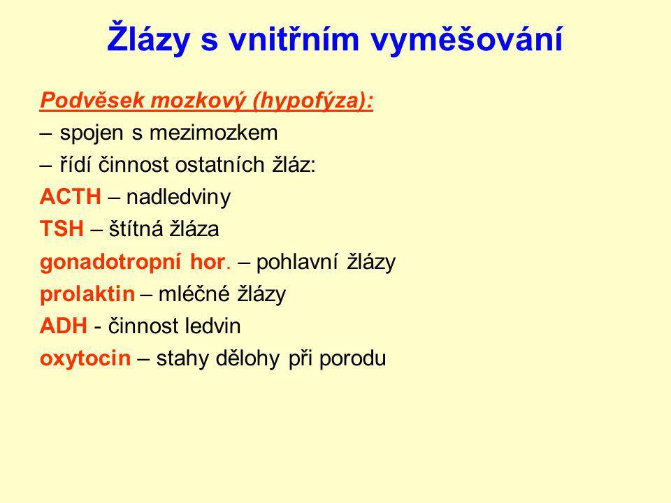 Žlázy s vnitřním vyměšování Podvěsek mozkový (hypofýza): –spojen s mezimozkem –řídí činnost ostatních žláz: ACTH – nadledviny TSH – štítná žláza gonad