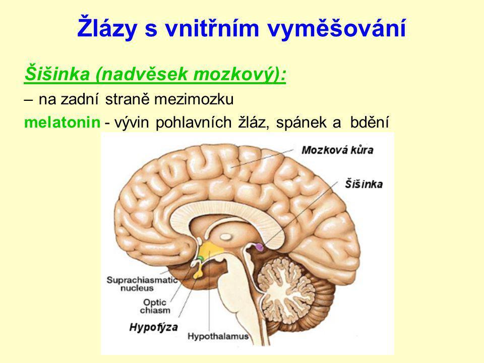 Žlázy s vnitřním vyměšování Šišinka (nadvěsek mozkový): –na zadní straně mezimozku melatonin - vývin pohlavních žláz, spánek a bdění
