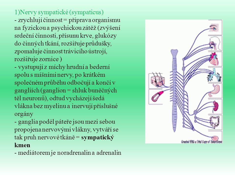 1)Nervy sympatické (sympaticus) - zrychlují činnost = příprava organismu na fyzickou a psychickou zátěž (zvýšení srdeční činnosti, přísunu krve, glukó