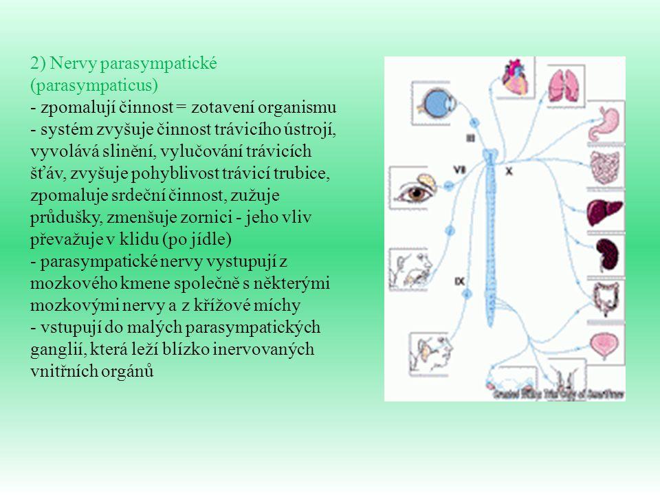 2) Nervy parasympatické (parasympaticus) - zpomalují činnost = zotavení organismu - systém zvyšuje činnost trávicího ústrojí, vyvolává slinění, vylučo