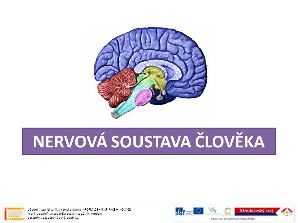 řídí činnost lidského těla (pohyb, činnost orgánů) umožňuje vnímání okolí (smyslové orgány) a uchovávání informací (paměť) tvořena vzájemně propojenými buňkami buňky si předávají signál pomocí vzruchů (elektrické a chemické povahy) nervové buňky tvoří síť, často nasedají na svaly (neurosvalová ploténka) NERVOVÁ SOUSTAVA Učební materiál vznikl v rámci projektu INFORMACE – INSPIRACE – INOVACE, který je spolufinancován Evropským sociálním fondem a státním rozpočtem České republiky.