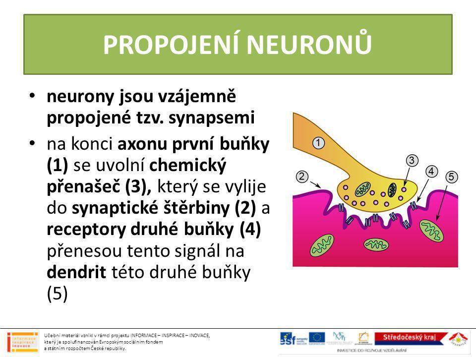 složená z mozku a míchy MÍCHA trubice uložená v páteřním kanále sahající od mozku až k 1.