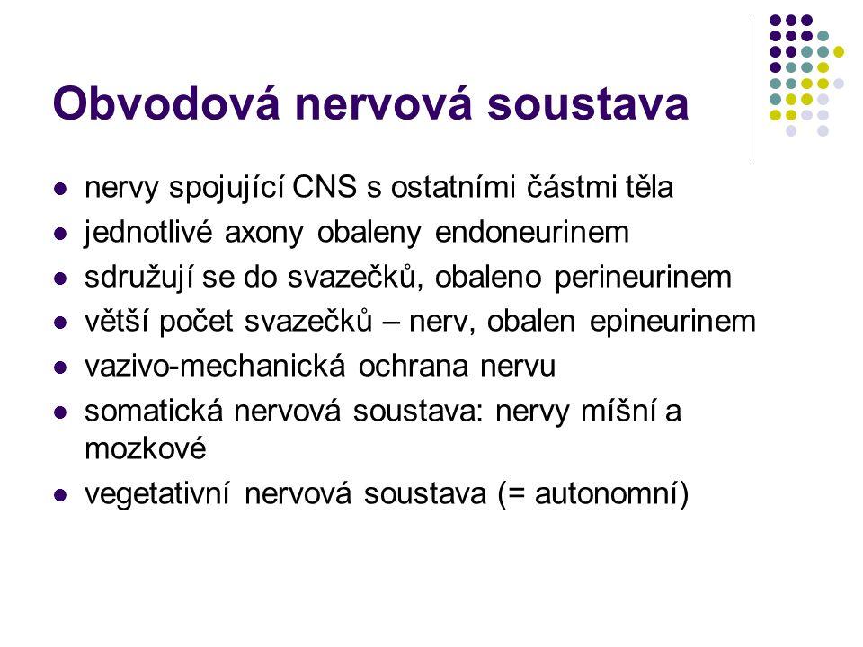 Dělení nervů ONS Podle vstupu/výstupu mozkové míšní Podle směru vedení vzruchu dostředivé nervy (aferentní, centripetální), - sensorické, speciální smysly - senzitivní, všeobecné smysly odstředivé nervy (eferentní, centrfugální) - hybné - vegetativní, hladké svalstvo, myokard, žlázy smíšené nervy