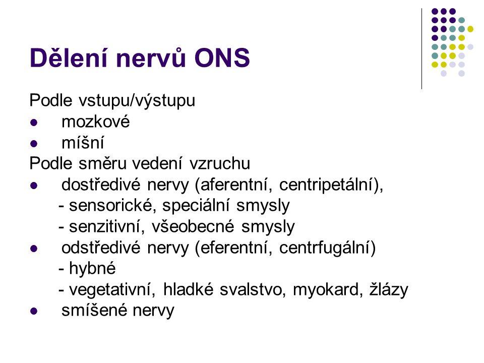 Somatická nervová soustava Mozkové nervy (hlavové) 12 párů smíšené (3), dostředivé (3) nebo odstředivé (6) vystupují jádra hlavových nervů (mozkový kmen) Míšní nervy 31 párů smíšené v páteřním kanálu dělení na dorzální kořeny míšní (dostředivá vlákna) a ventrální (odstředivá vlákna) míšní nerv (spojení dorzálních a ventrálních kořenů) míšní segmenty (31 párů)