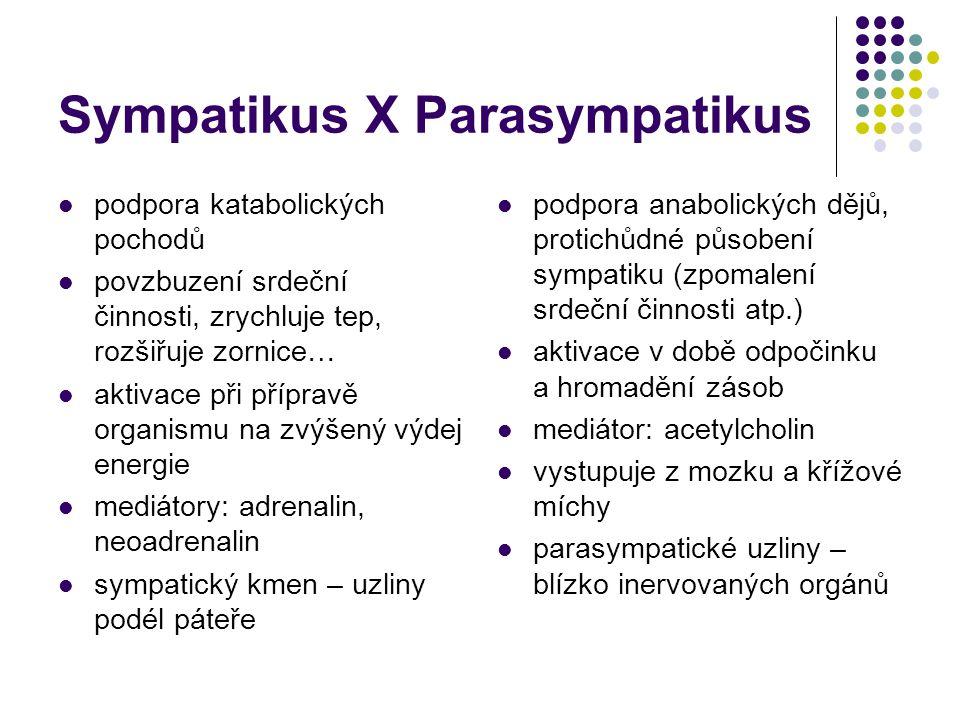 Sympatikus X Parasympatikus podpora katabolických pochodů povzbuzení srdeční činnosti, zrychluje tep, rozšiřuje zornice… aktivace při přípravě organis