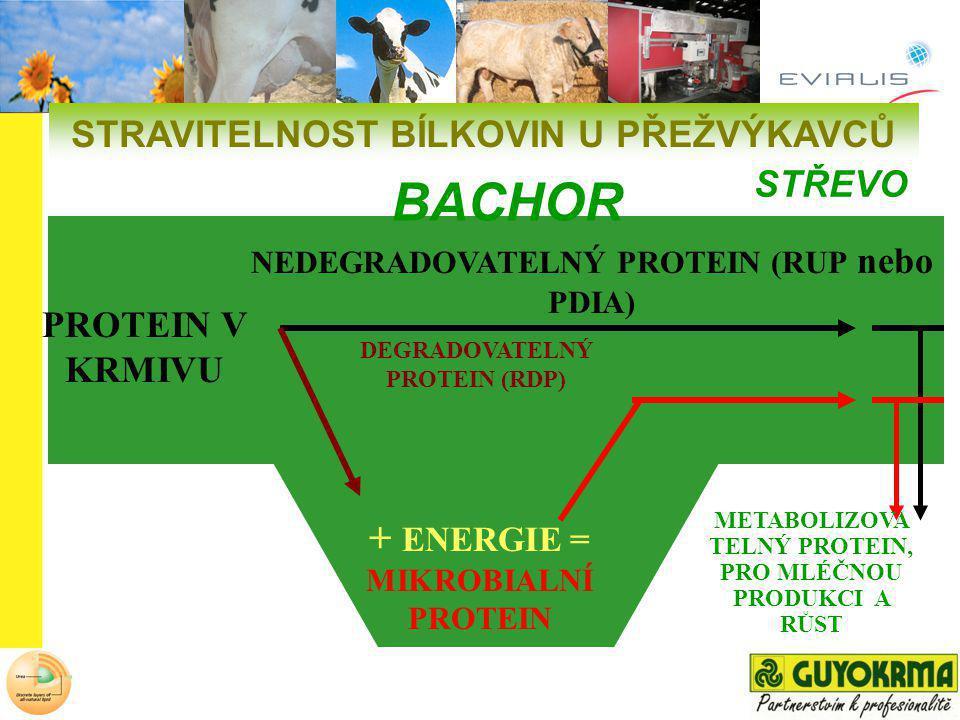 NEDEGRADOVATELNÝ PROTEIN (RUP nebo PDIA) DEGRADOVATELNÝ PROTEIN (RDP) PROTEIN V KRMIVU + ENERGIE = MIKROBIALNÍ PROTEIN STŘEVO BACHOR METABOLIZOVA TELN