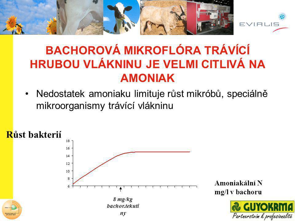 Amoniakální N mg/l v bachoru Růst bakterií BACHOROVÁ MIKROFLÓRA TRÁVÍCÍ HRUBOU VLÁKNINU JE VELMI CITLIVÁ NA AMONIAK Nedostatek amoniaku limituje růst