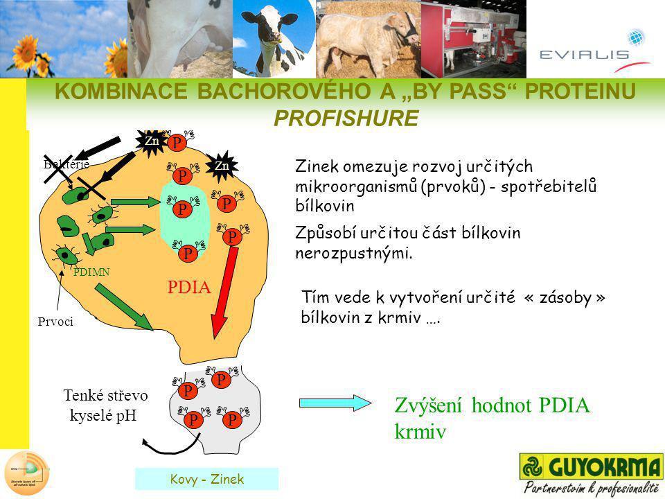 Tenké střevo kyselé pH Baktérie Prvoci P P PP PDIMN PDIA Zvýšení hodnot PDIA krmiv Tím vede k vytvoření určité « zásoby » bílkovin z krmiv …. P P P P