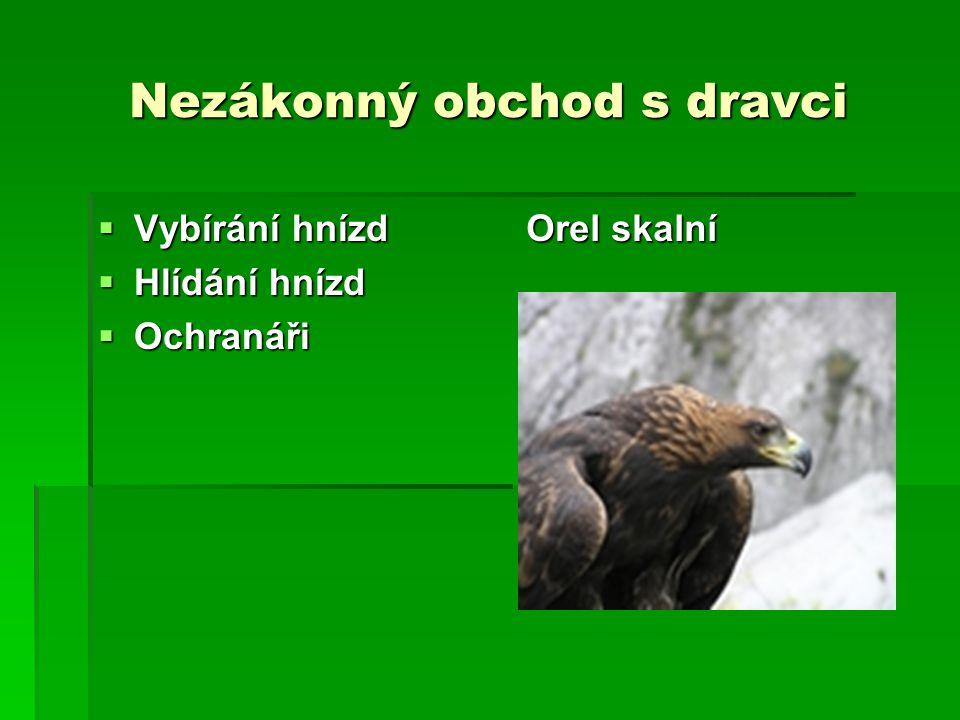 Nezákonný obchod s dravci  Vybírání hnízd  Hlídání hnízd  Ochranáři Orel skalní
