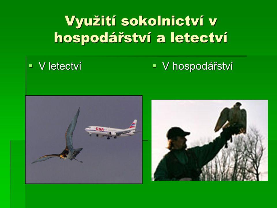 Využití sokolnictví v hospodářství a letectví  V letectví  V hospodářství