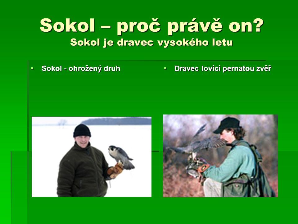 Sokol – proč právě on? Sokol je dravec vysokého letu  Sokol - ohrožený druh  Dravec lovící pernatou zvěř