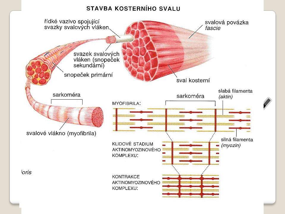 bílkovinná vlákenka