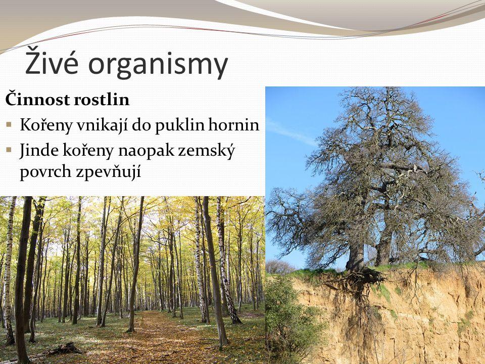 Živé organismy Činnost rostlin  Kořeny vnikají do puklin hornin  Jinde kořeny naopak zemský povrch zpevňují