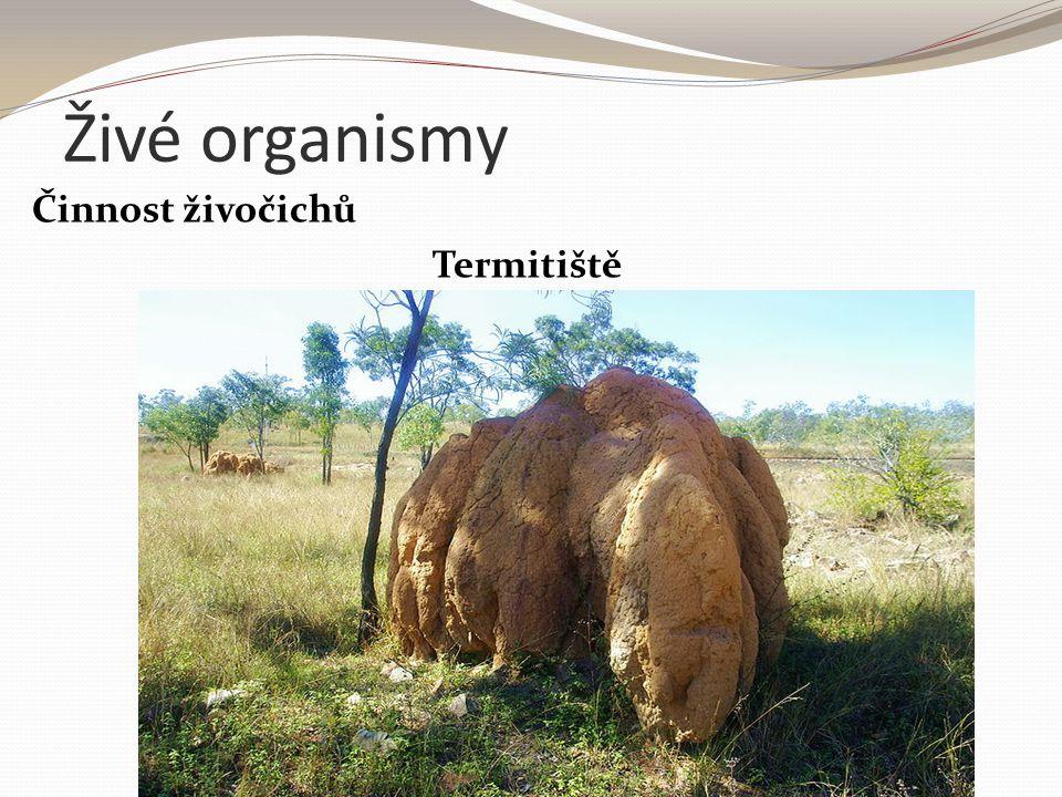 Živé organismy Činnost živočichů Termitiště
