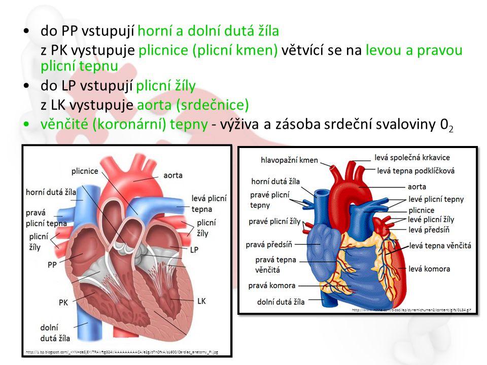 do PP vstupují horní a dolní dutá žíla z PK vystupuje plicnice (plicní kmen) větvící se na levou a pravou plicní tepnu do LP vstupují plicní žíly z LK vystupuje aorta (srdečnice) věnčité (koronární) tepny - výživa a zásoba srdeční svaloviny 0 2 http://www.mhhe.com/biosci/ap/dynamichuman2/content/gifs/0134.gif http://1.bp.blogspot.com/_-IYNHdaSjEY/TRAVftg324I/AAAAAAAAACA/e2gJbTnOfxA/s1600/Cardiac_anatomy_PI.jpg