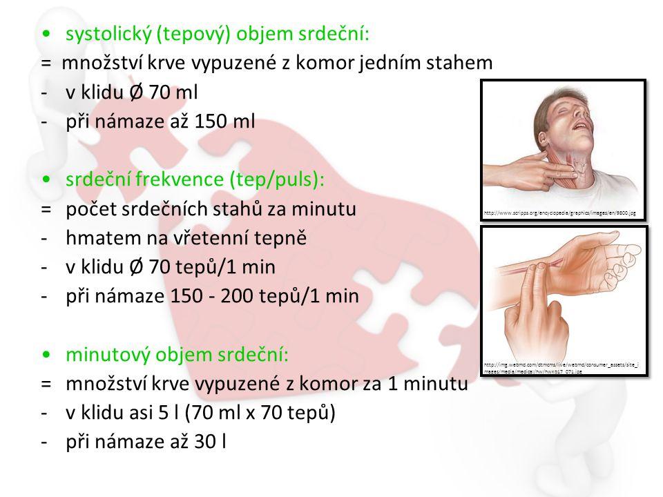 systolický (tepový) objem srdeční: = množství krve vypuzené z komor jedním stahem -v klidu Ø 70 ml -při námaze až 150 ml srdeční frekvence (tep/puls): =počet srdečních stahů za minutu -hmatem na vřetenní tepně -v klidu Ø 70 tepů/1 min -při námaze 150 - 200 tepů/1 min minutový objem srdeční: =množství krve vypuzené z komor za 1 minutu -v klidu asi 5 l (70 ml x 70 tepů) -při námaze až 30 l http://img.webmd.com/dtmcms/live/webmd/consumer_assets/site_i mages/media/medical/hw/hwkb17_071.jpg http://www.scripps.org/encyclopedia/graphics/images/en/9800.jpg