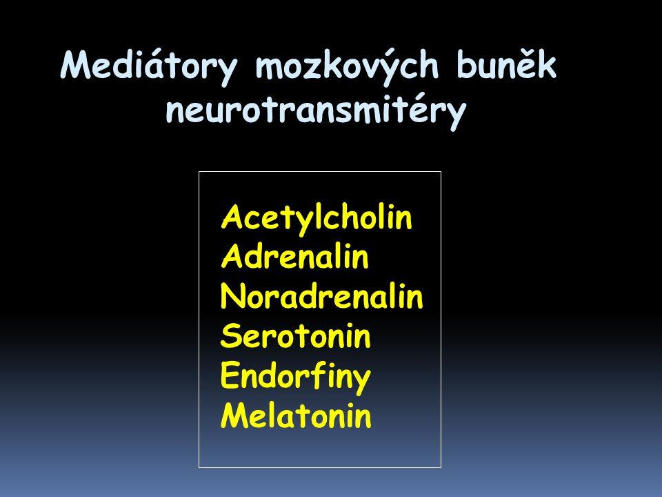 Mediátory mozkových buněk neurotransmitéry neurotransmitéry Acetylcholin Adrenalin Noradrenalin Serotonin Endorfiny Melatonin