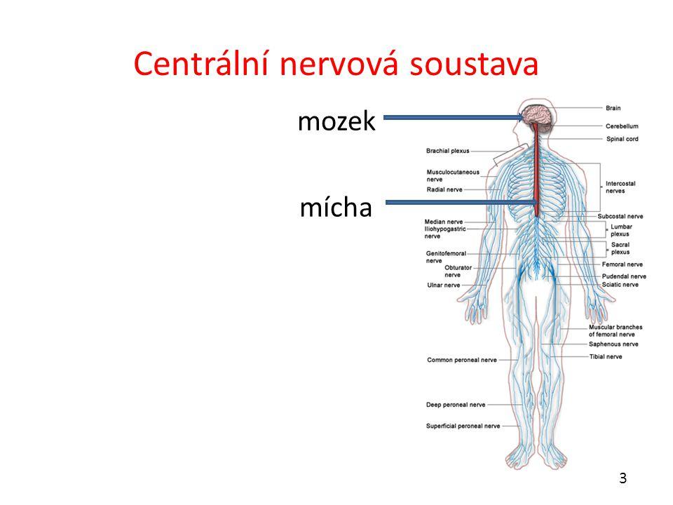Centrální nervová soustava mozek mícha 3