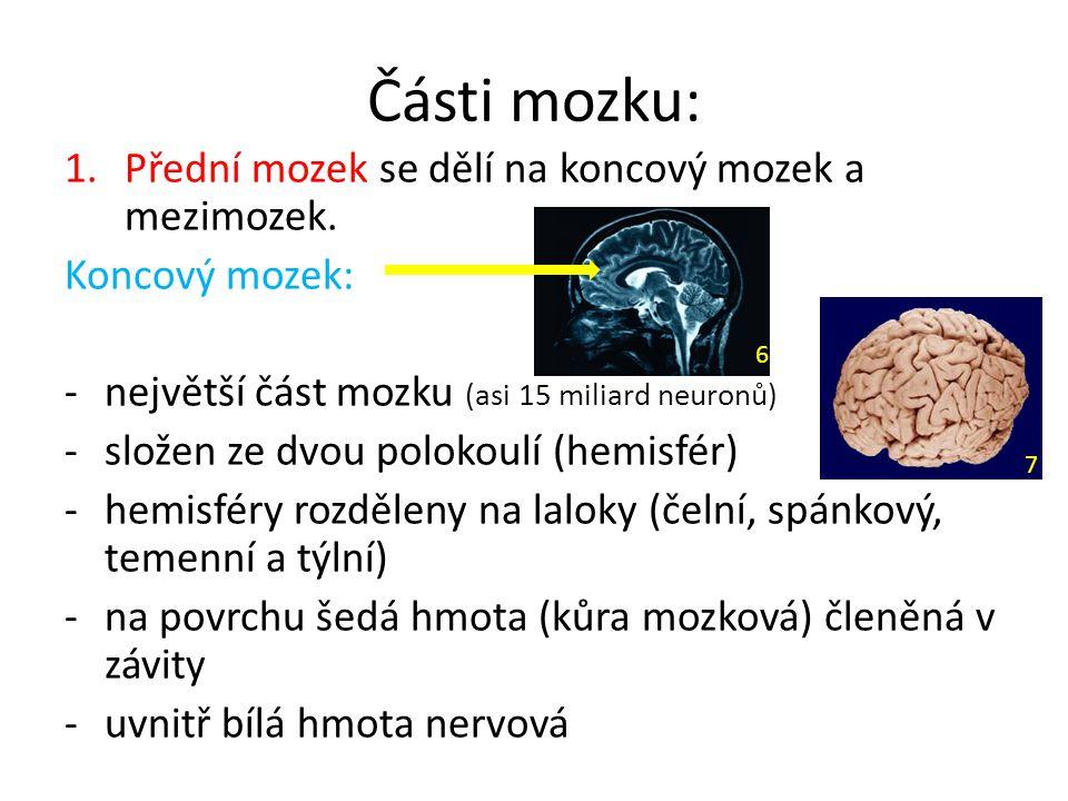 Části mozku: 1.Přední mozek se dělí na koncový mozek a mezimozek. Koncový mozek: -největší část mozku (asi 15 miliard neuronů) -složen ze dvou polokou