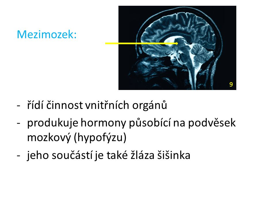 Mezimozek: -řídí činnost vnitřních orgánů -produkuje hormony působící na podvěsek mozkový (hypofýzu) -jeho součástí je také žláza šišinka 9