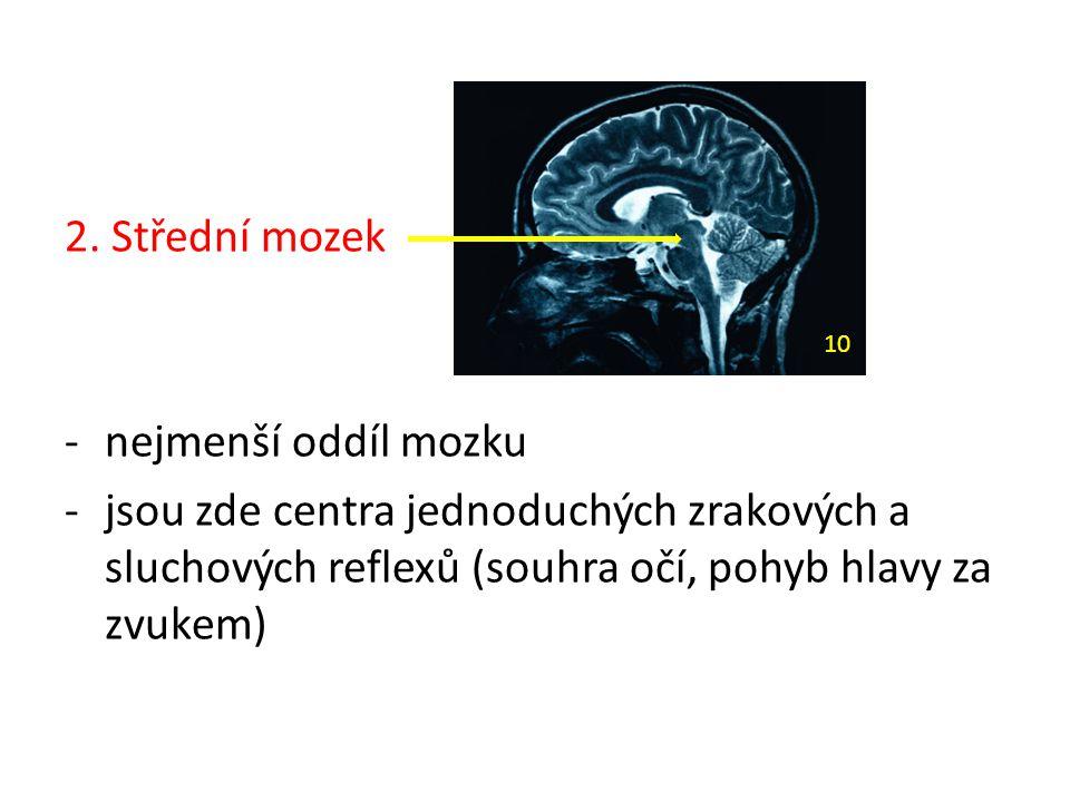 2. Střední mozek -nejmenší oddíl mozku -jsou zde centra jednoduchých zrakových a sluchových reflexů (souhra očí, pohyb hlavy za zvukem) 10