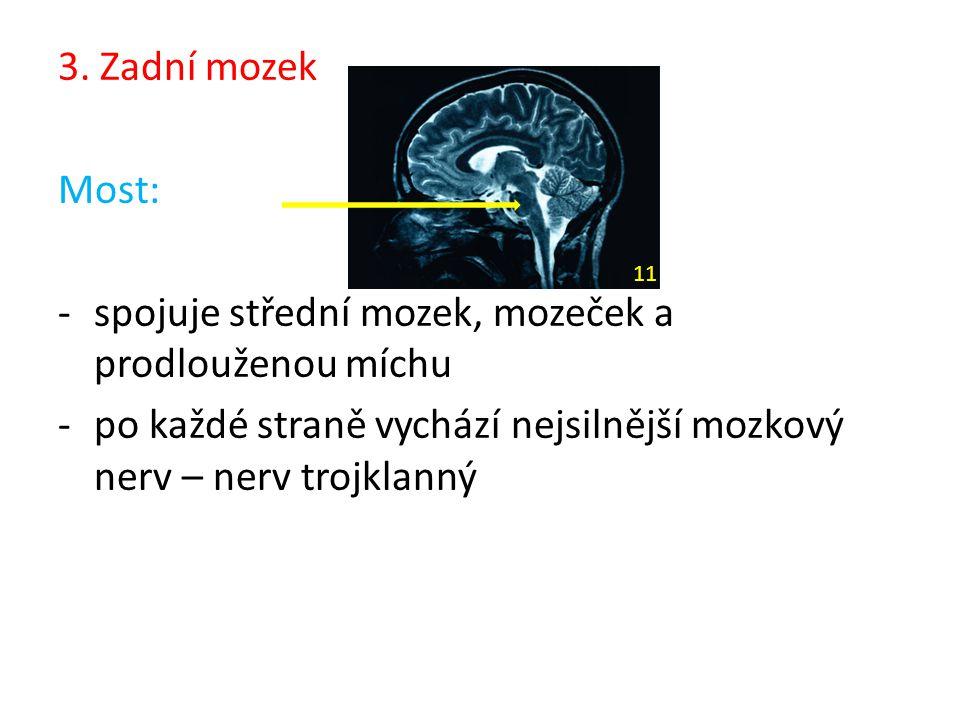 3. Zadní mozek Most: -spojuje střední mozek, mozeček a prodlouženou míchu -po každé straně vychází nejsilnější mozkový nerv – nerv trojklanný 11