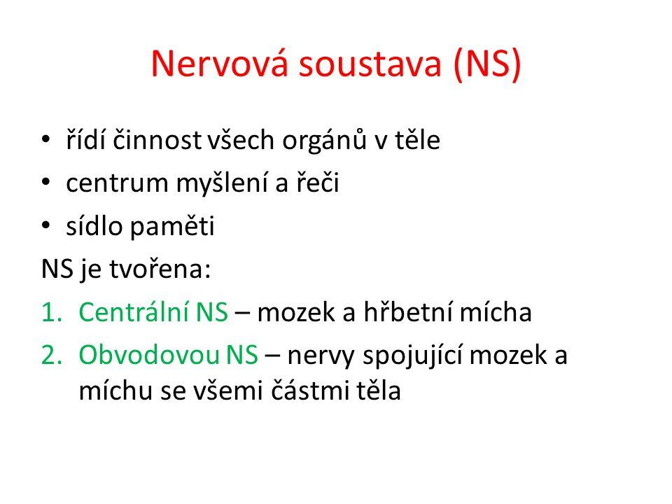 Nervová soustava (NS) řídí činnost všech orgánů v těle centrum myšlení a řeči sídlo paměti NS je tvořena: 1.Centrální NS – mozek a hřbetní mícha 2.Obv