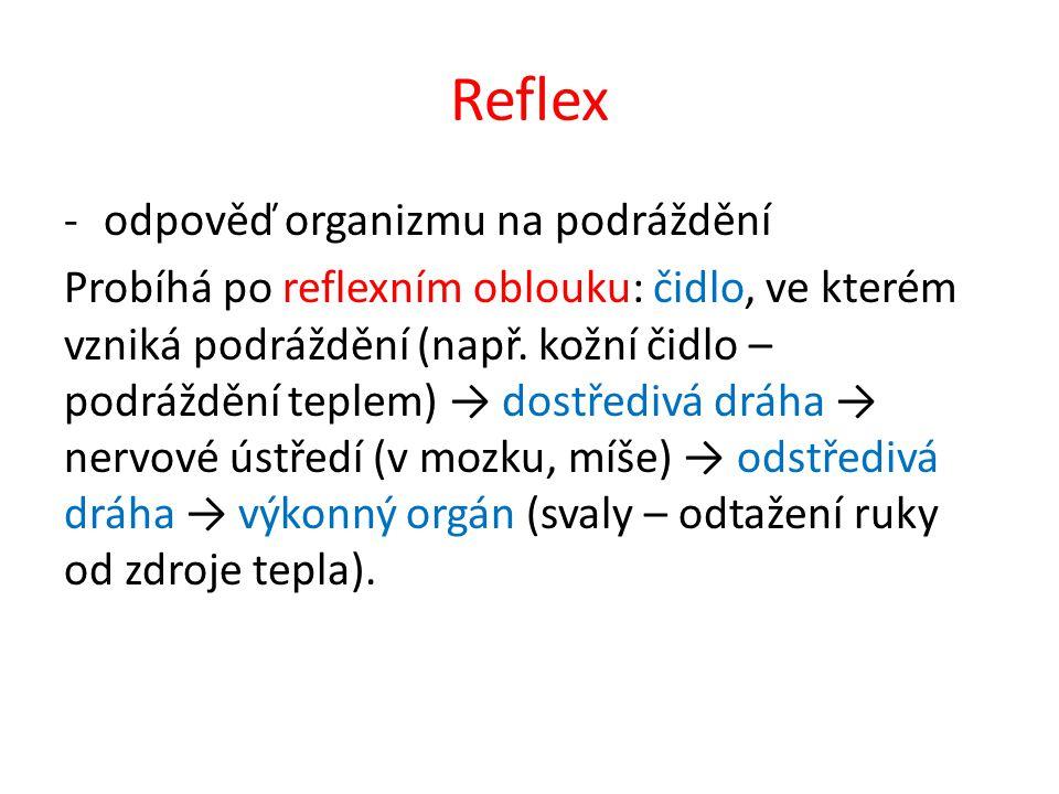 Reflex -odpověď organizmu na podráždění Probíhá po reflexním oblouku: čidlo, ve kterém vzniká podráždění (např. kožní čidlo – podráždění teplem) → dos