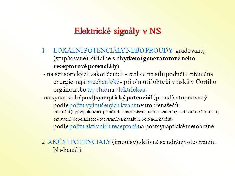 Elektrické signály v NS 1.LOKÁLNÍ POTENCIÁLY NEBO PROUDY- gradované, (stupňované), šířící se s úbytkem (generátorové nebo receptorové potenciály) - na sensorických zakončeních - reakce na sílu podnětu, přeměna energie např mechanické - při ohnutí lokte či vlásků v Cortiho orgánu nebo tepelné na elektrickou -na synapsích (post)synaptický potenciál (proud), stupňovaný podle počtu vyloučených kvant neuropřenašečů: inhibiční (hyperpolarizace po několik ms postsynaptické membrány - otevírání Cl kanálů) aktivační (depolarizace - otevírání Na kanálů nebo Na-K kanálů) podle počtu aktivních receptorů na postsynaptické membráně 2.