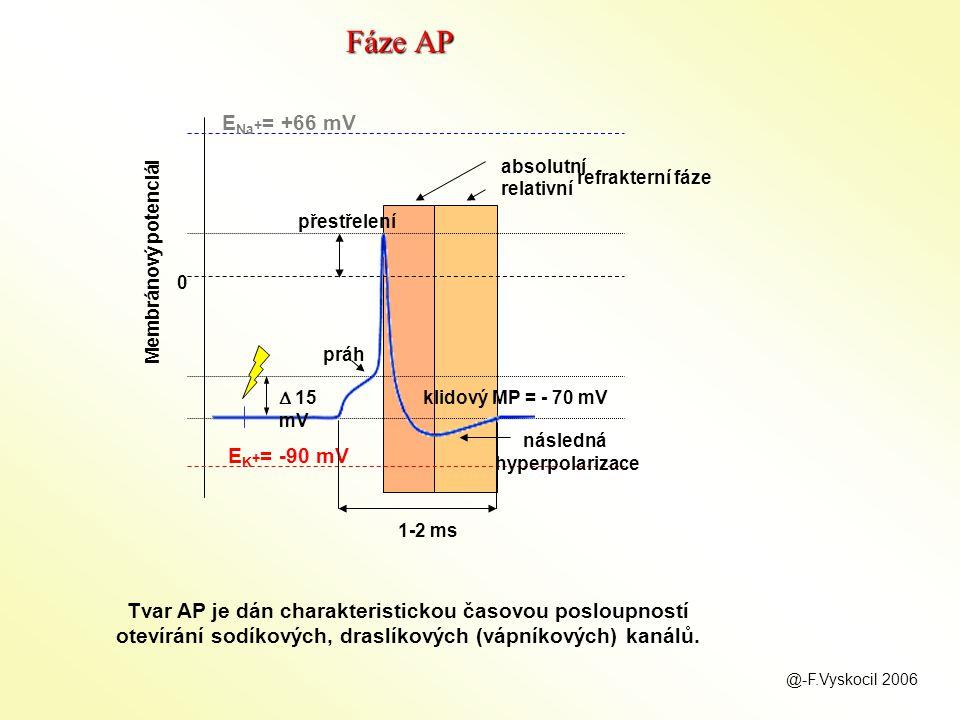 následná hyperpolarizace přestřelení práh E Na + = +66 mV E K + = -90 mV klidový MP = - 70 mV 0 Membránový potenciál  15 mV absolutní relativní refrakterní fáze 1-2 ms Tvar AP je dán charakteristickou časovou posloupností otevírání sodíkových, draslíkových (vápníkových) kanálů.