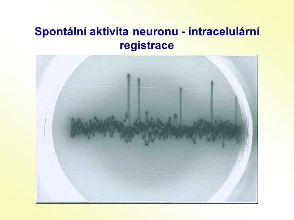 Spontální aktivita neuronu - intracelulární registrace