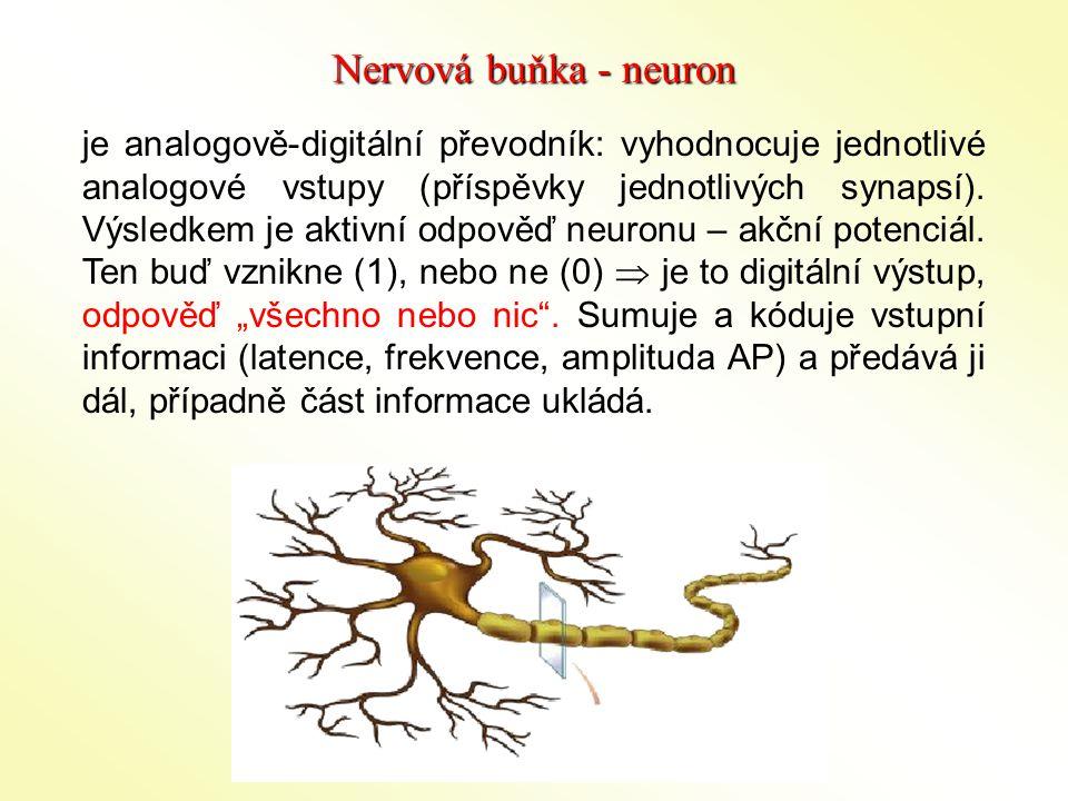 Nervová buňka - neuron je analogově-digitální převodník: vyhodnocuje jednotlivé analogové vstupy (příspěvky jednotlivých synapsí). Výsledkem je aktivn
